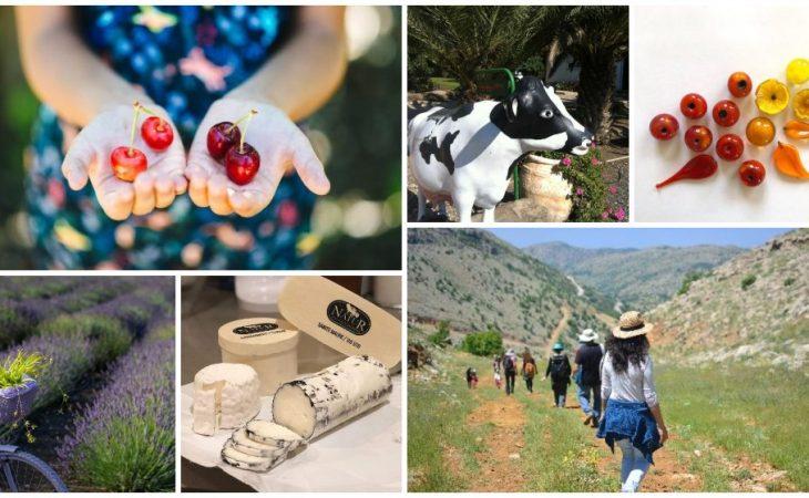 חג השבועות בגולן – חגיגה של צבעים, טעמים וריחות