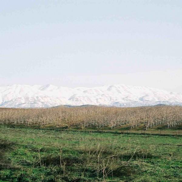 הצפון נצבע לבן: הטיול האולטימטיבי לחורף | כתבה באתר ישראל היום