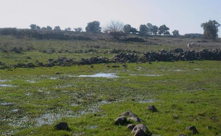 שמורת אורטל – צמחי מים נדירים וחיות ביצה